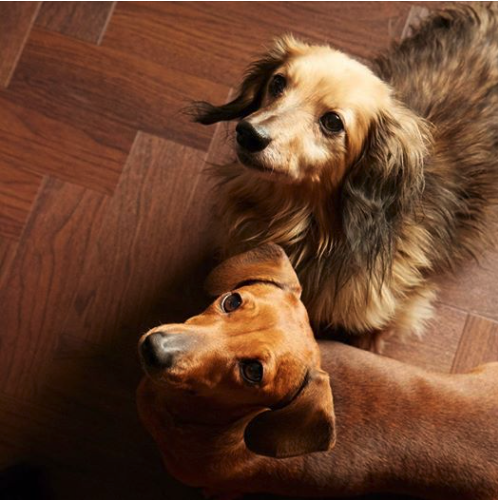 The Best Flooring for Pets