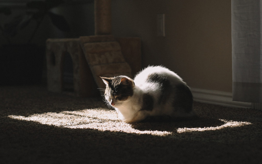 Choosing the Best Pet-Friendly Flooring for Your Home